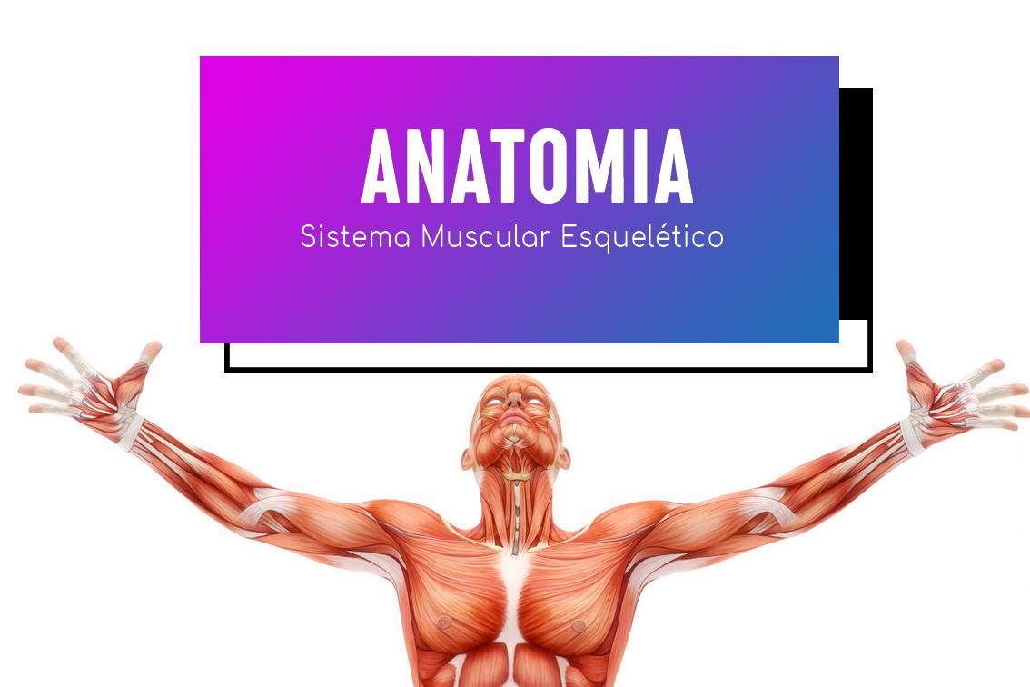 Anatomia Do Sistema Muscular Esquelético